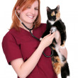 Woman vet with cat — Stok fotoğraf