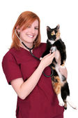 Woman vet with cat — Stock Photo