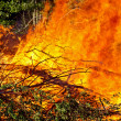Downed trees on fire - Stock Photo