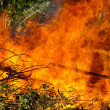 Stock Photo: Downed trees on fire
