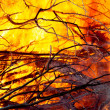Stock Photo: Fire closeups