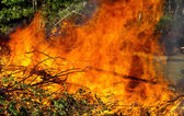 Downed trees on fire — Stock Photo