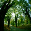 Park in afternoon — Stock Photo