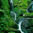Stock Photo: Rainforest waterfall