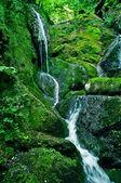 Cascade de la forêt tropicale — Photo