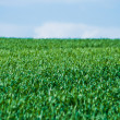 Fresh green grass on a hill — Stock Photo