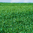 Green grass on a hill — Stock Photo