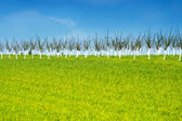 Fresh green grass and orchard on a hill — Stock Photo