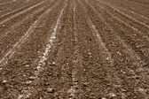 Agricultural soil — Stock Photo