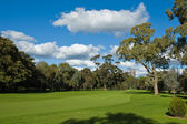 Landscape of a green golf field — Stock Photo