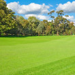 Landscape of a green golf field — Stock Photo