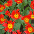 Red and yellow tulips - Lizenzfreies Foto