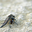 Close up of fly and bee - Stock Photo