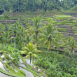 Terrace in Bali - Stock Photo