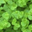 Green background Vitality growing - Stock Photo