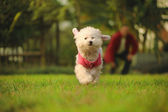 Dog run on the grass — Stock Photo