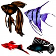 Collection aquarian fishes — Stock Vector