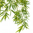 Bamboo leaves — Stock Photo #2747524