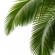 Foto Stock: Leaves of palm tree