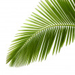 Leaves of palm tree — Stock Photo #2749161