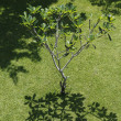 Stock Photo: Tree shadow
