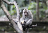 Monkey forest — Stock Photo
