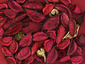 Red leafs background — Stock Photo