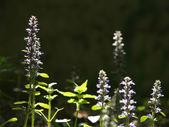 Flores na clareira de sunligted — Foto Stock