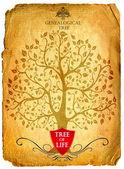 Tree of life — Stock Photo