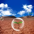 Water bubble in arid soil desert - Stock Photo