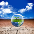Earth green life in desert — Stock Photo