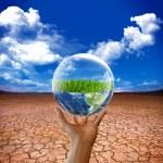Earth green life in desert — Stock Photo