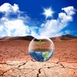 Earth green life in desert - Stock Photo