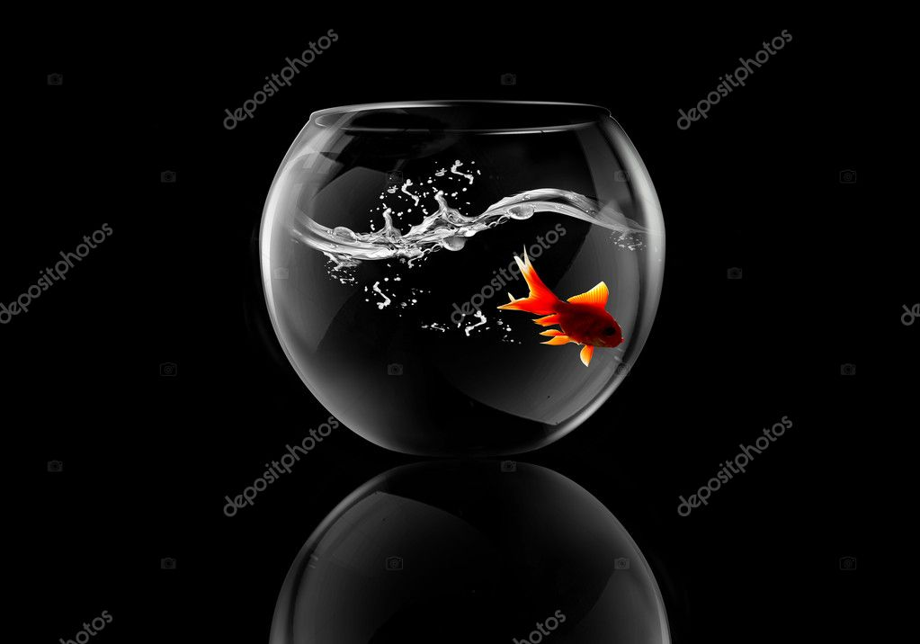 Goldfish in a aquarium  Photo #2998898