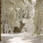 Winter trail — Stock Photo