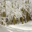 Winter forest — Stock Photo #2744228