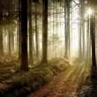 Forest path at sunset - Stock Photo