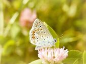 Butterfly on a pink flower — Stock Photo