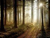 Lesní cesta při západu slunce — Stock fotografie