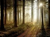 Skogsstigen vid solnedgången — Stockfoto