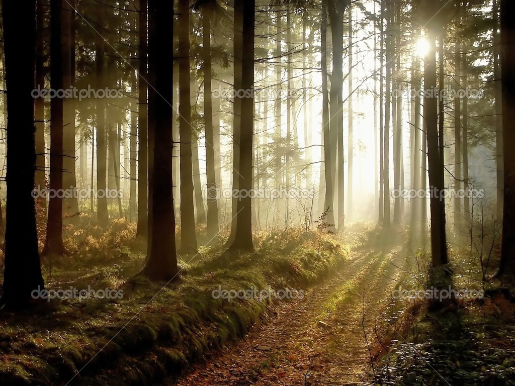 Path leading through the coniferous forest in the direction of the setting sun. Photo taken in November. — Stock Photo #2768282