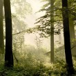Sunbeams falls into spring forest — Stock Photo
