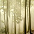 Misty autumn forest in the morning — Stock Photo