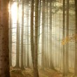 Coniferous forest at sunrise — Stock Photo #2811166
