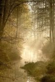 Sunlight falls into misty forest — 图库照片