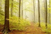 Path leading by beech woods — Stock Photo