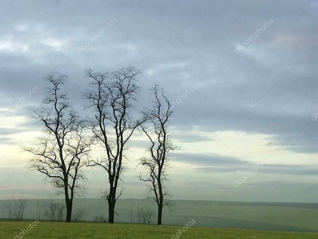 Bare trees at dusk. Photo taken in January. — Stock Photo #2811405