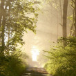 Stock Photo: Spring forest at sunrise
