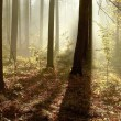 Autumn woods at dawn — Stockfoto