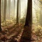 Autumn woods at dawn — Stock Photo